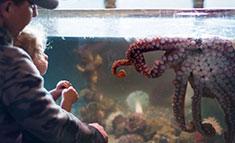 Uclulet Aquarium